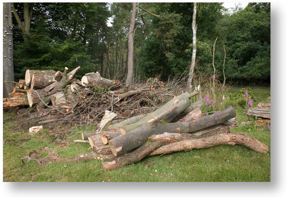 Besparen Op Openhaardhout : Brandhout gratis of brandhout kopen wat zijn de voor en nadelen