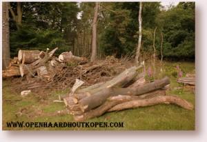 Brandhout is gratis in het bos. Maar het bevat nog teveel vocht om het te gebruiken als haardhout.