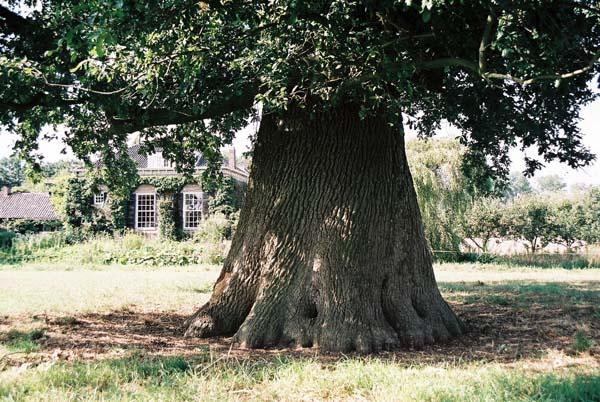 Eikenhout als openhaardhout